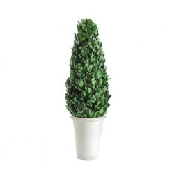 preserved-boxwood-topiary-relish-decor
